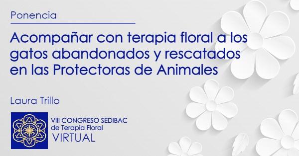 Acompañar con terapia floral a los gatos abandonados y rescatados en las Protectoras de Animales